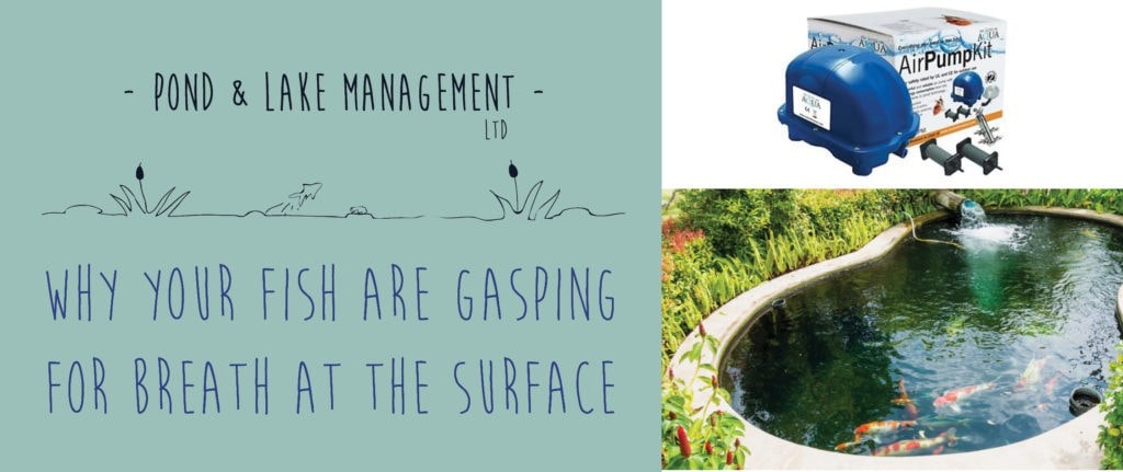 Why Your Fish are Gasping for Breath at the Surface | Pond